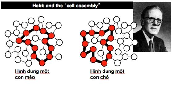"""giả thuyết """"tế bào như bộ phận lắp ráp"""""""