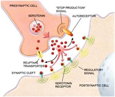 tế neuron truyền thông tin