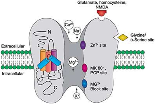 cấu trúc receptor
